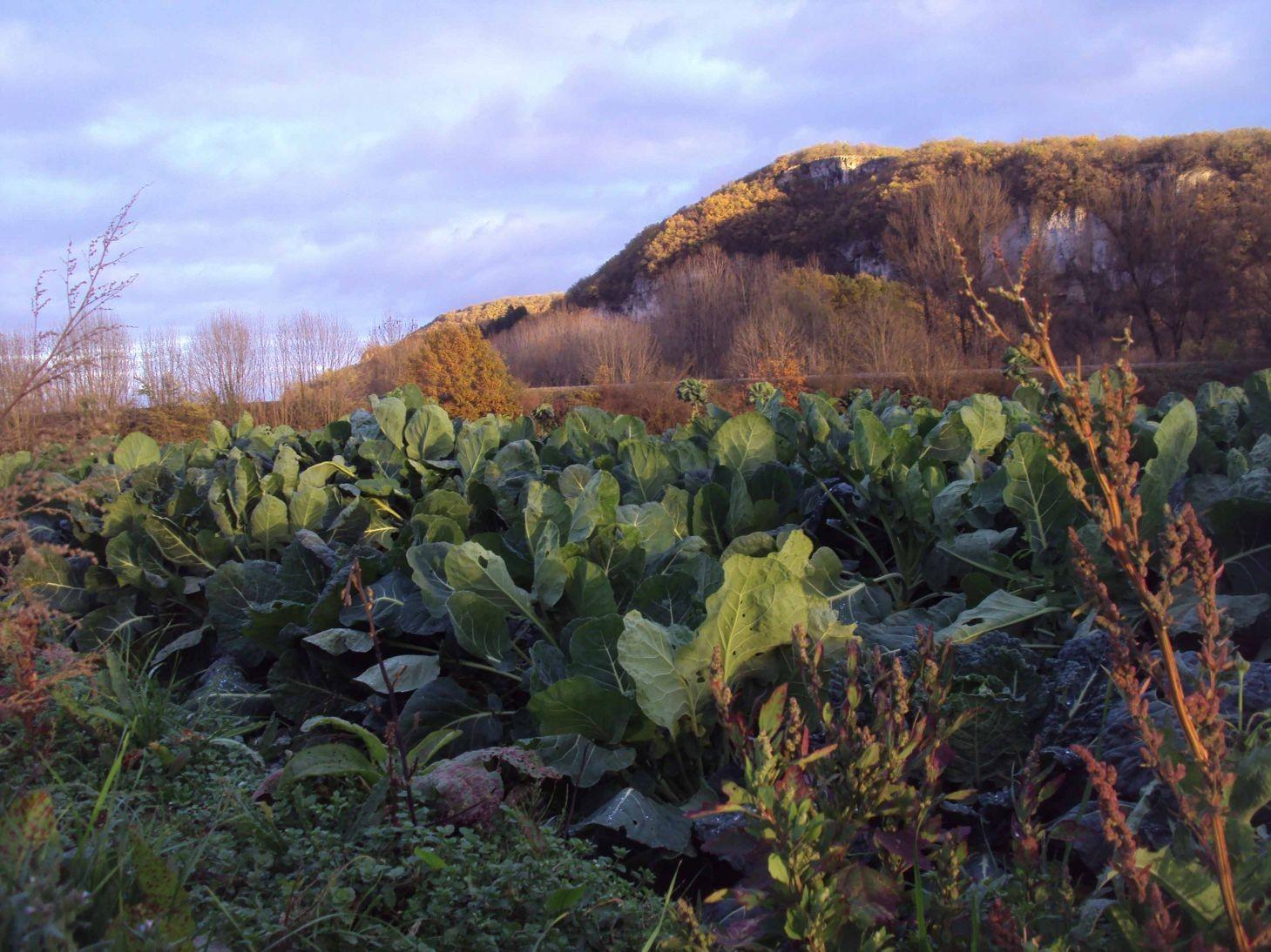 Les légumes bio de Sabine Verlinde